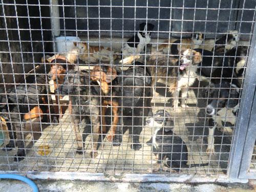 Tierhilfe Montenegro